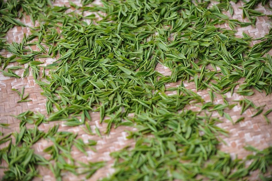 tea-garden-1557697_1920