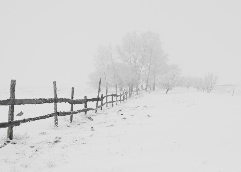 winter-20248_1920
