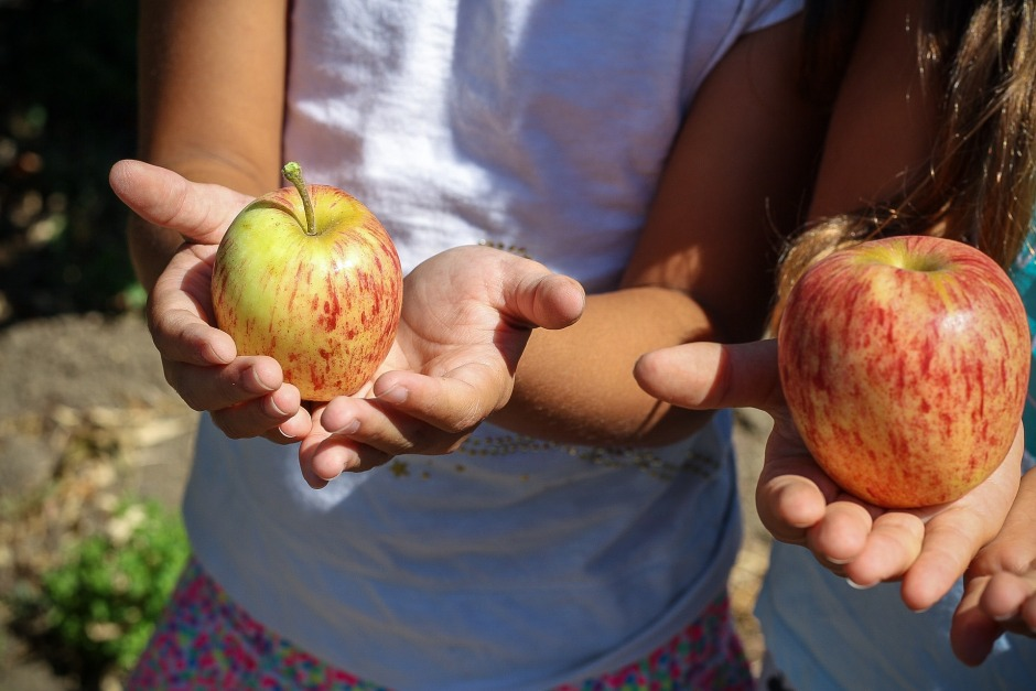 apple-1572648_1920.jpg