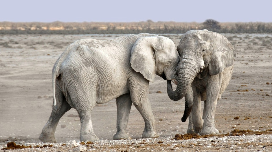 elephant-1170108_1920.jpg